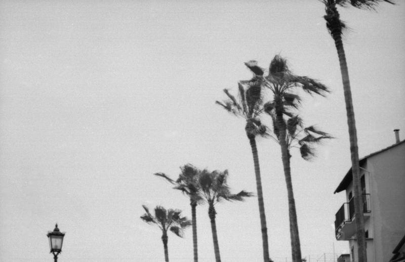 palms & co