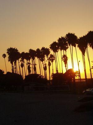 Palms in CA
