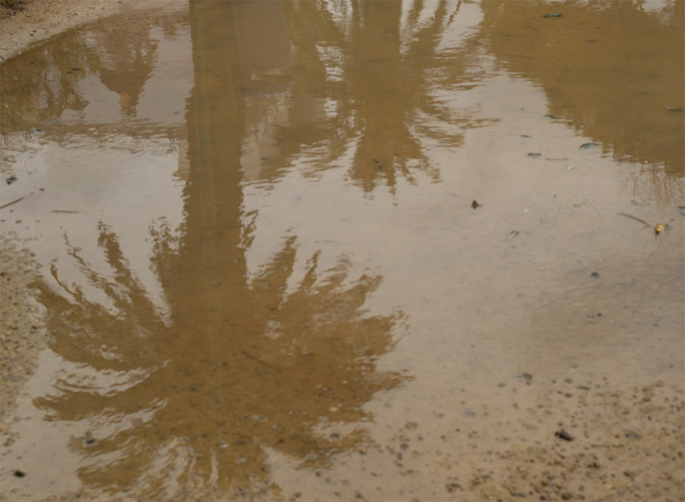 Palms reflection