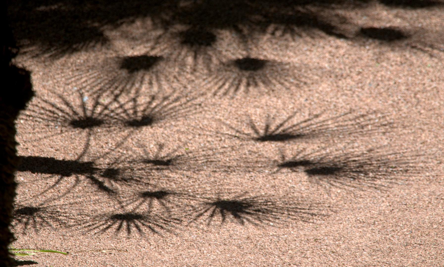 Palms shadow