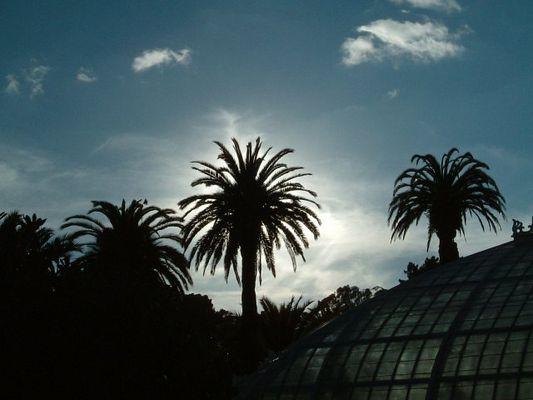 palmsonnentag