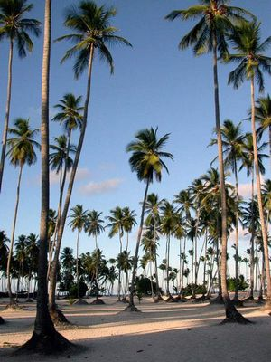 palmtrees and sand