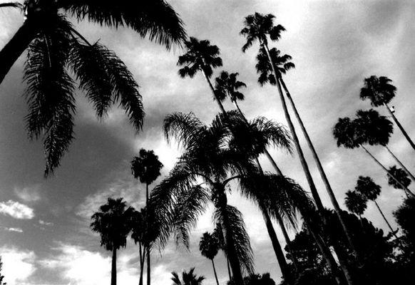 palmtrees ca