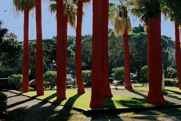 PalmTrees_In_Barcelona_2