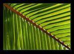 Palmwedel diagonal
