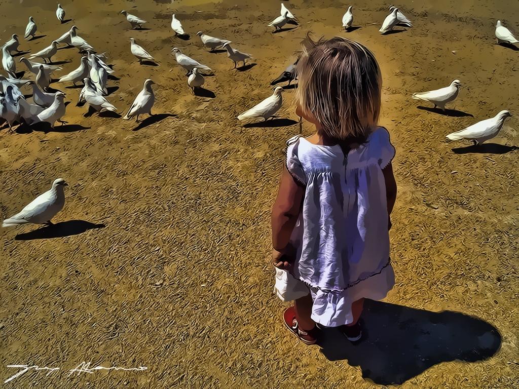 Palomas blancas