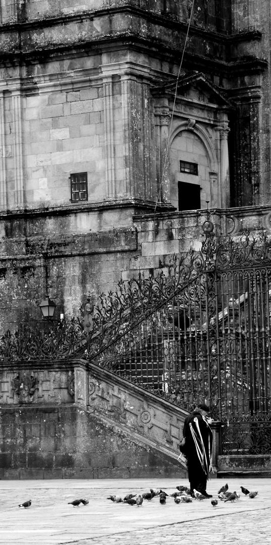 palomas en la catedral