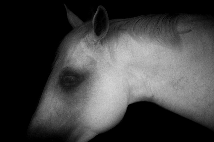 Palos Verdes Horse No 10
