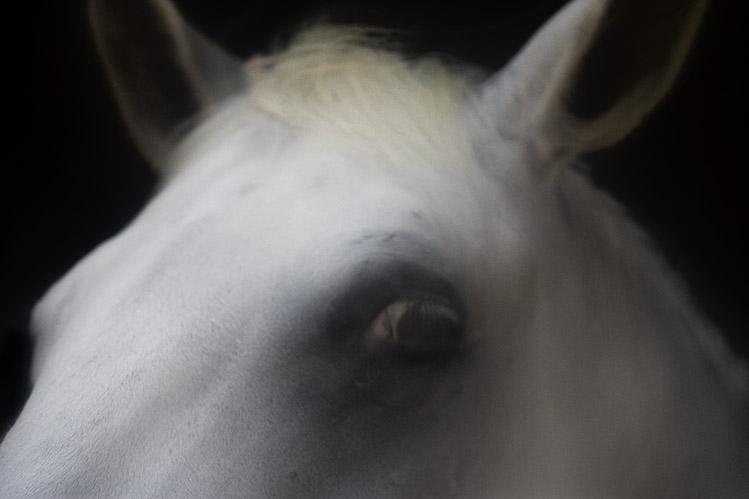 Palos Verdes Horse No 9