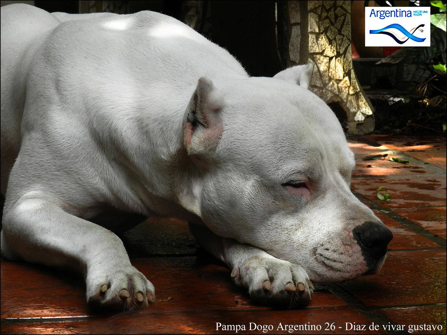 Pampa Dogo Argentino 26 - Diaz de vivar gustavo