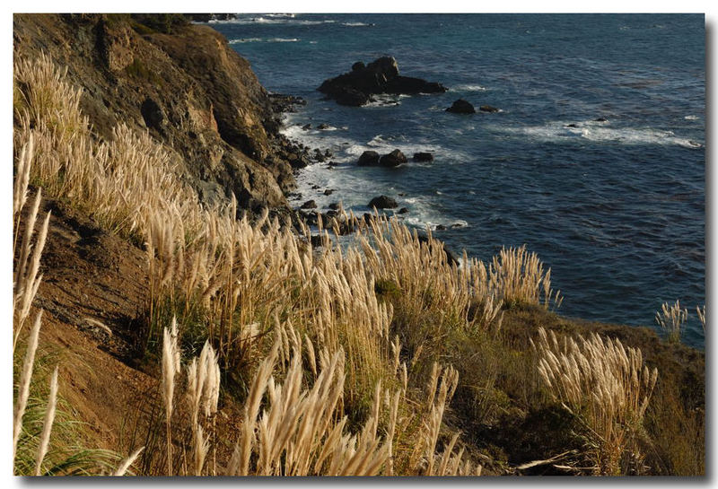 Pampas on the Coast