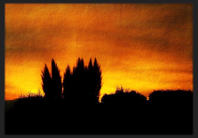 Pampasgras in der Abendsonne