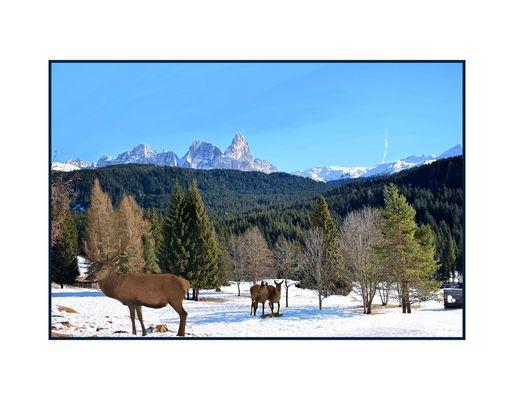 Pampeago-Dolomiti