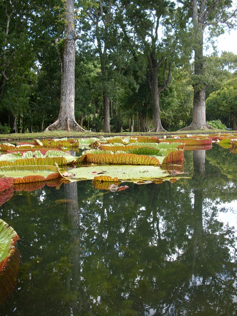 Pampelmousses Garden