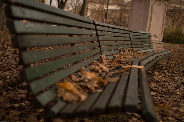 Panchina con foglie