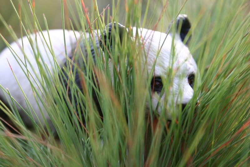 Panda im hohen Gras