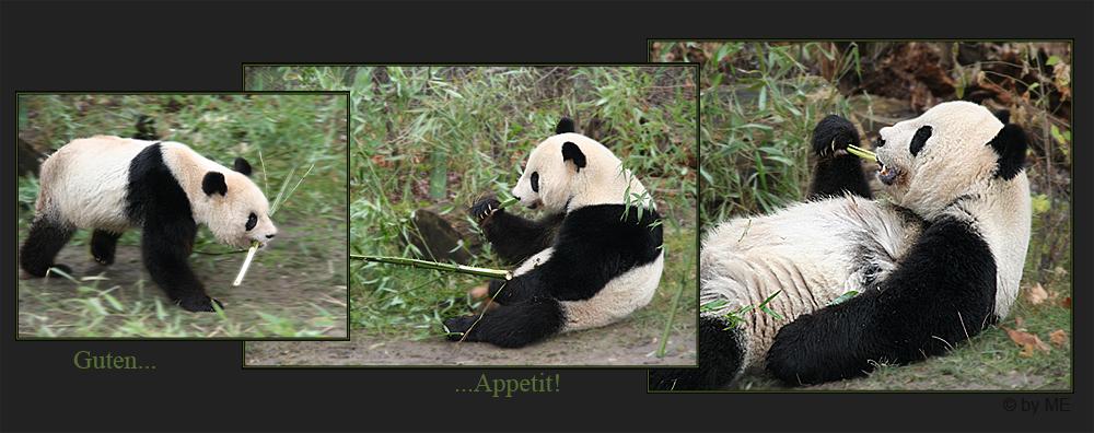 panda *reload*
