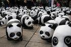 Pandas auf Tour