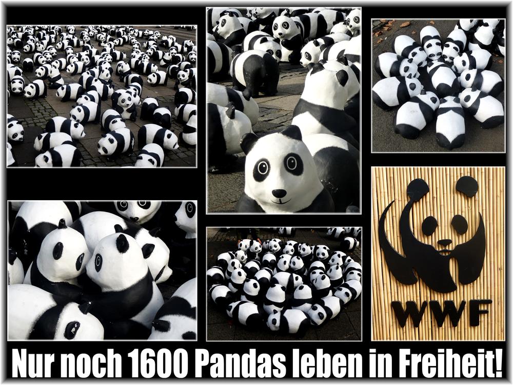 Pandas on Tour
