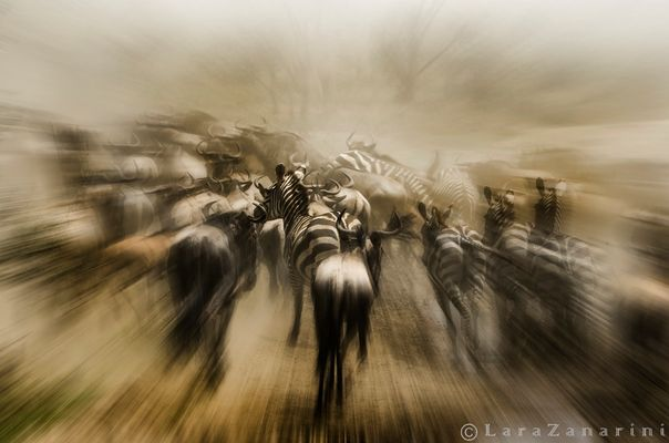 Panico nella migrazione