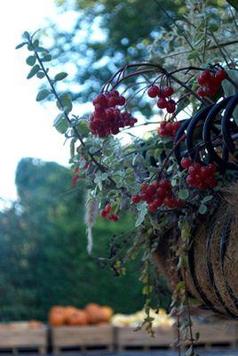 Panier de fruits sauvages