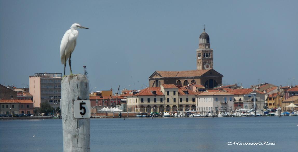 panorama di Chioggia con garzetta