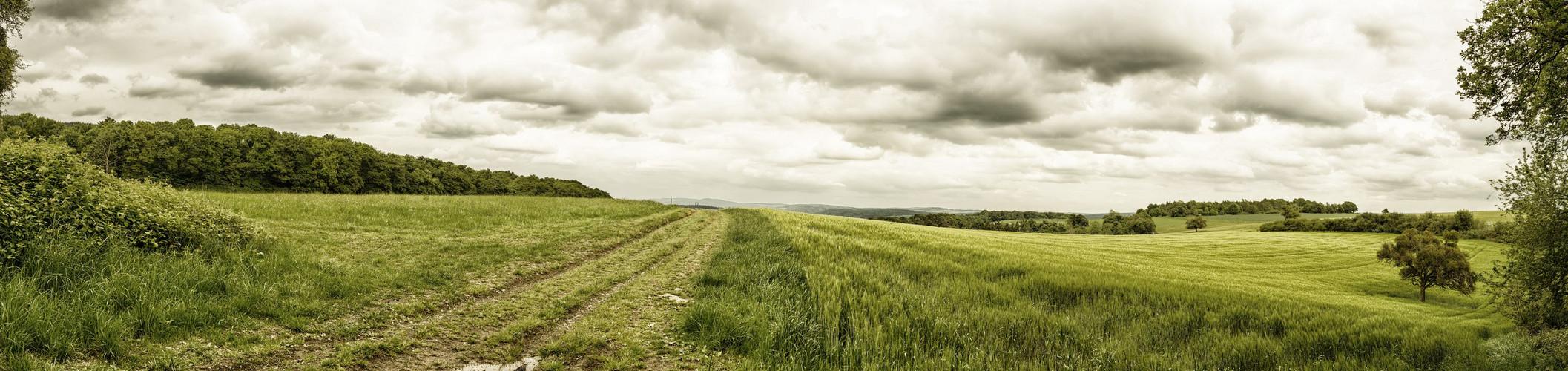 Panorama eines Feldes auf dem Traumpfad Wolfsdelle bei Rhens