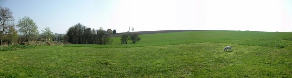 Panorama Feld