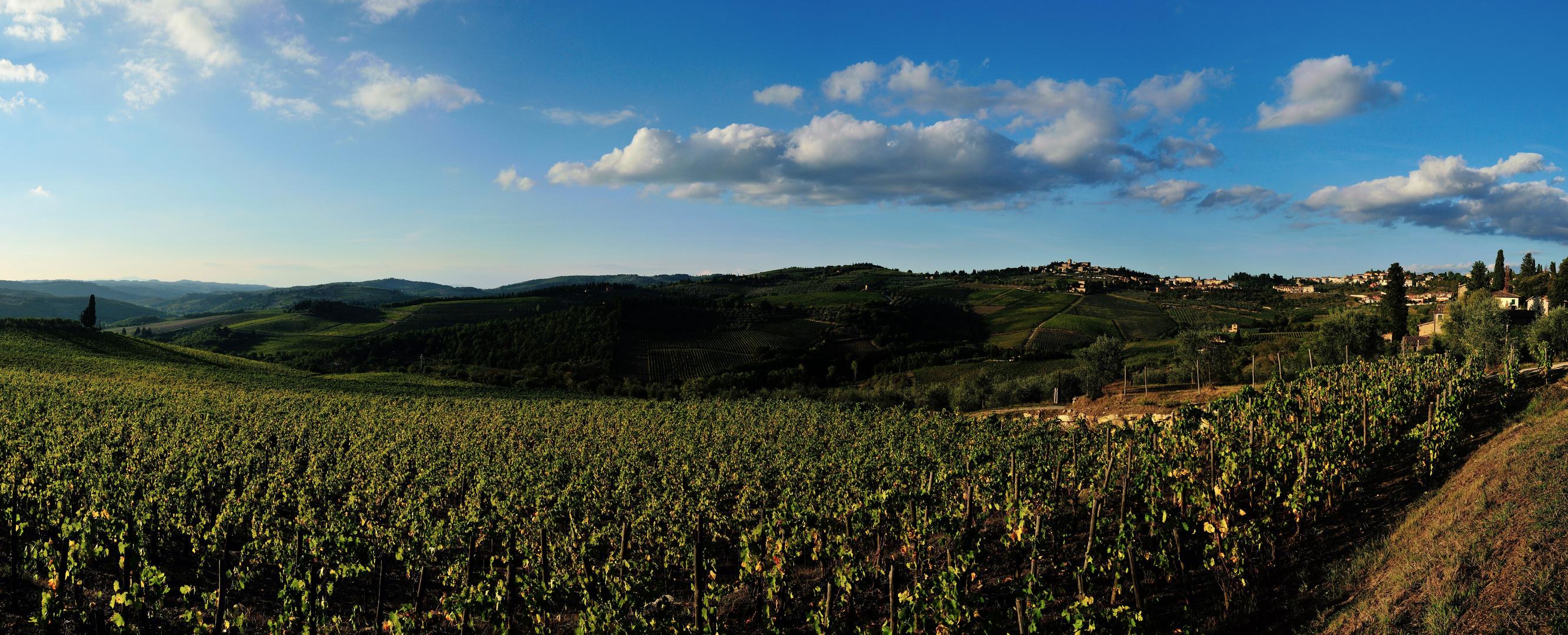 Panorama Panzano und Weinberge