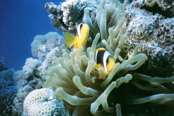 Panorama Reef