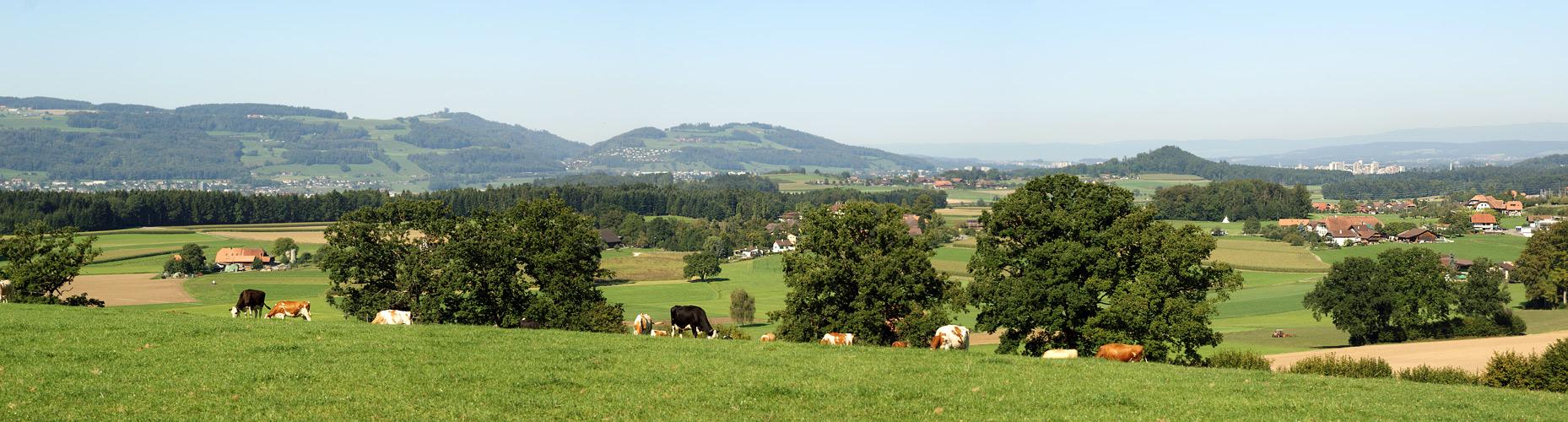 Panorama vom Horn, Trimstein
