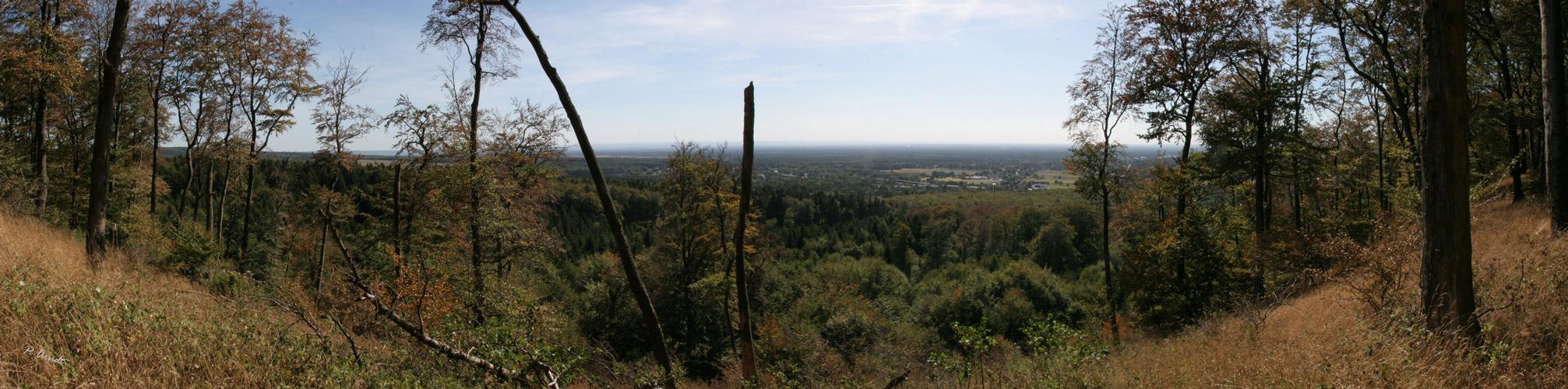 Panorama von Augustdorf