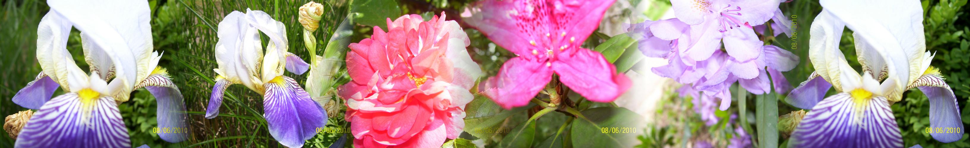 Panorama:Blume