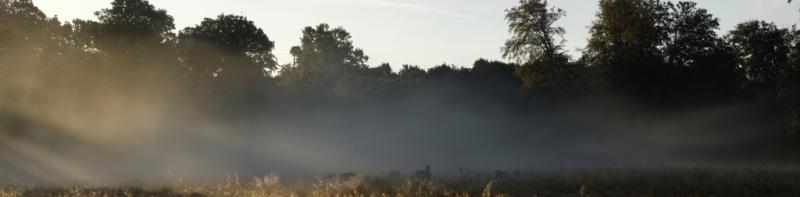 Panoramique au lever du soleil avec des biches