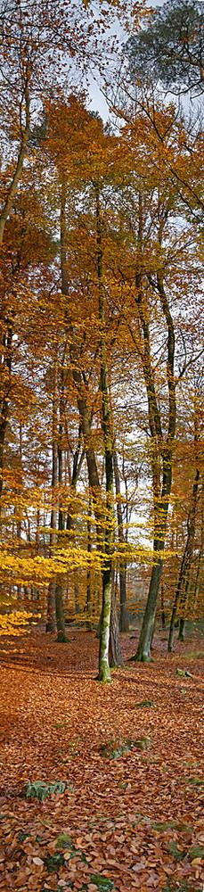 panoramique d'automne