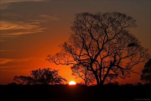 Pantanal [7] - Sunset