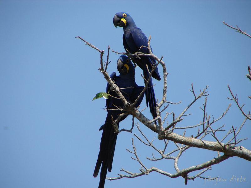 Pantanal: Die mag jeder...