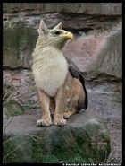 Panthera Avis