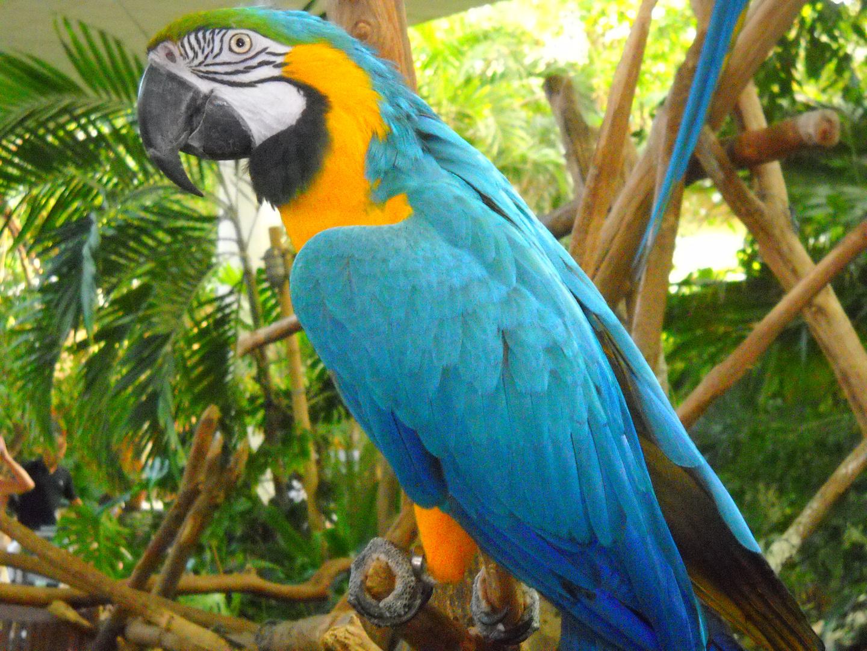 papagei foto bild tiere zoo wildpark falknerei v gel bilder auf fotocommunity. Black Bedroom Furniture Sets. Home Design Ideas