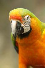 Papagei Aufnahme