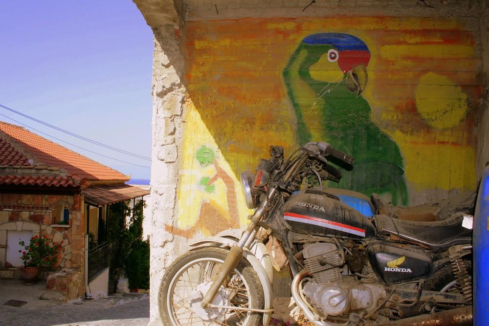 Papagei fährt Motorrad
