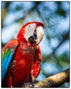 Papagei im Tierpark Gettorf