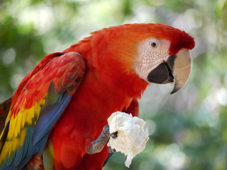 Papagei im Vale do Paraíso