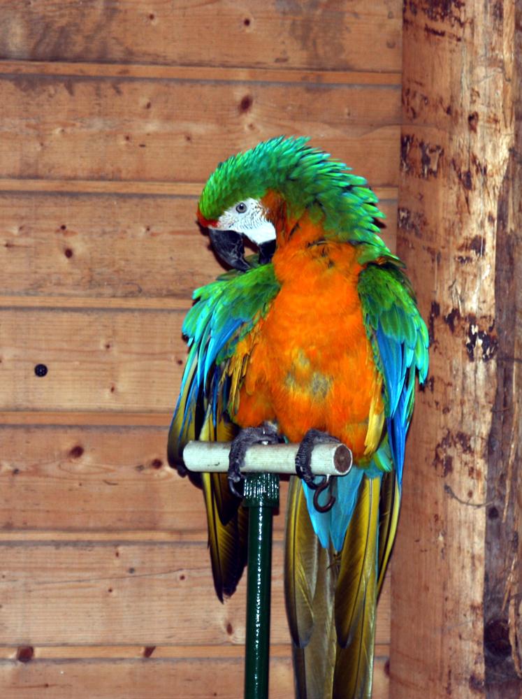 Papagei im Wildgehege Hellenthal