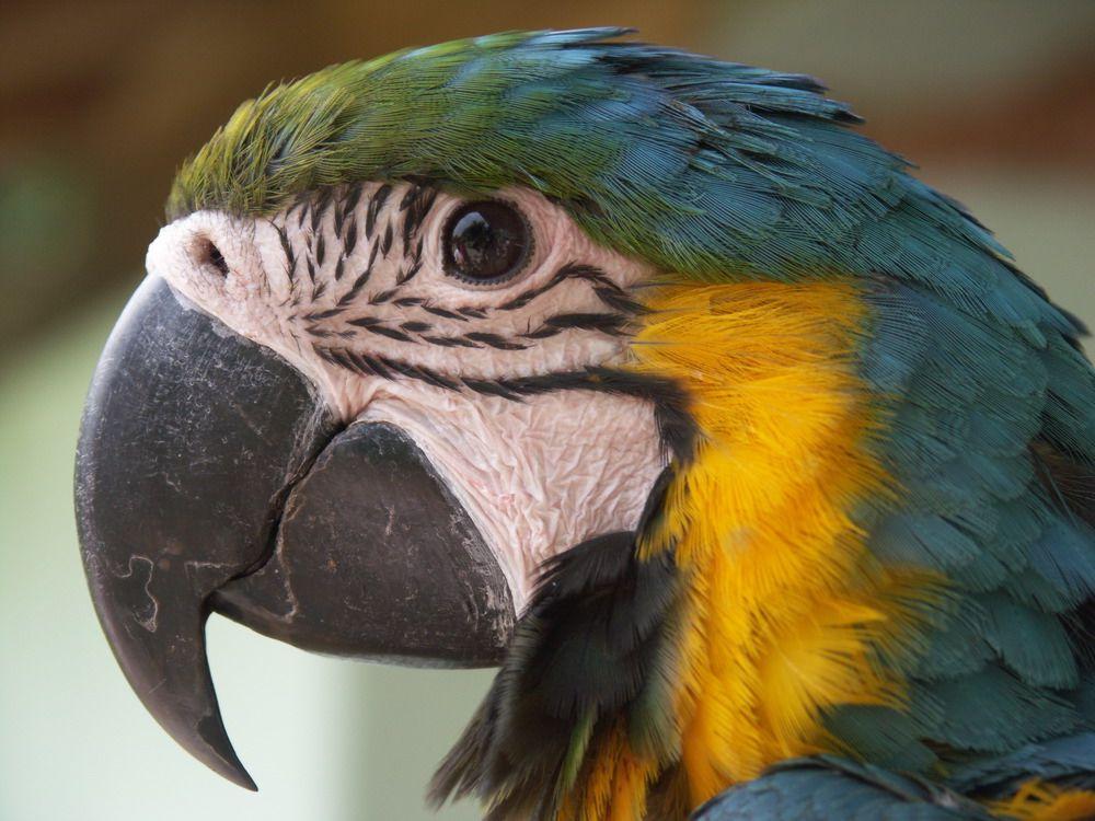 Papagei oder doch Mamagei?