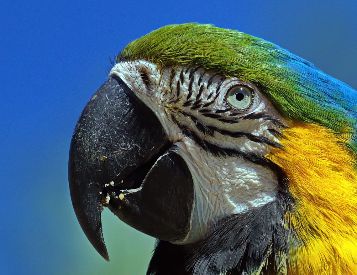 Papagei-Portrait