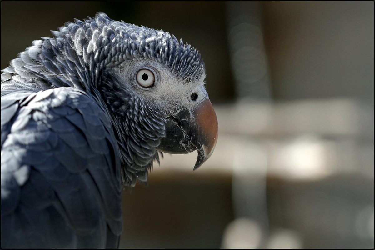 Papagei sucht Mamagei