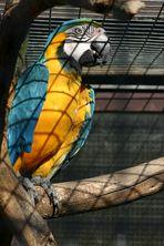 Papagei - Vogelpark Niendorf 2006