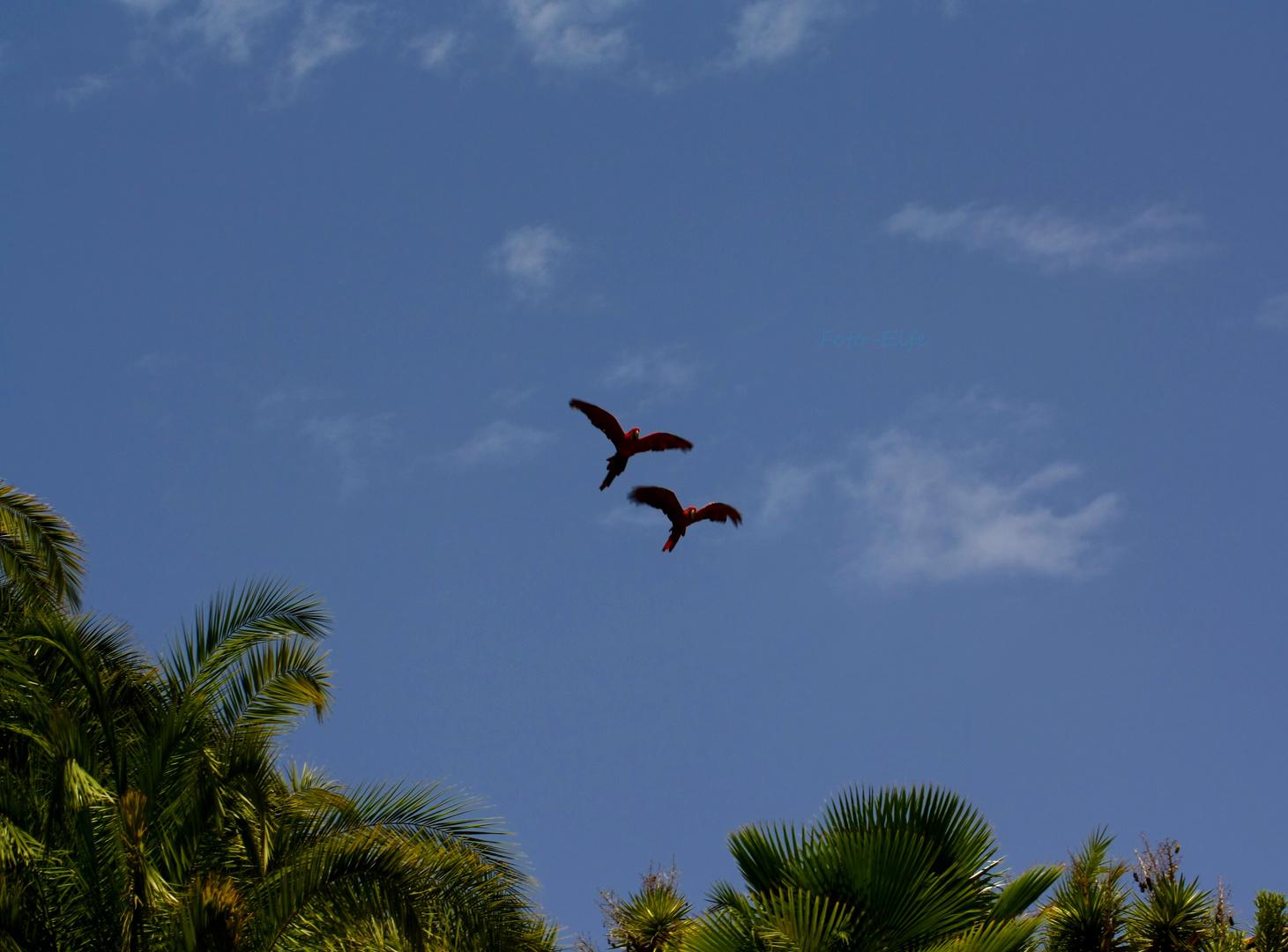 Papageie fliegen um die Oase vom Palmitos Park