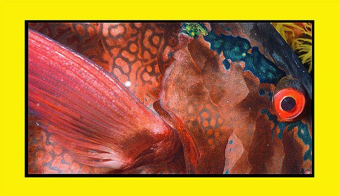 Papageien Fisch